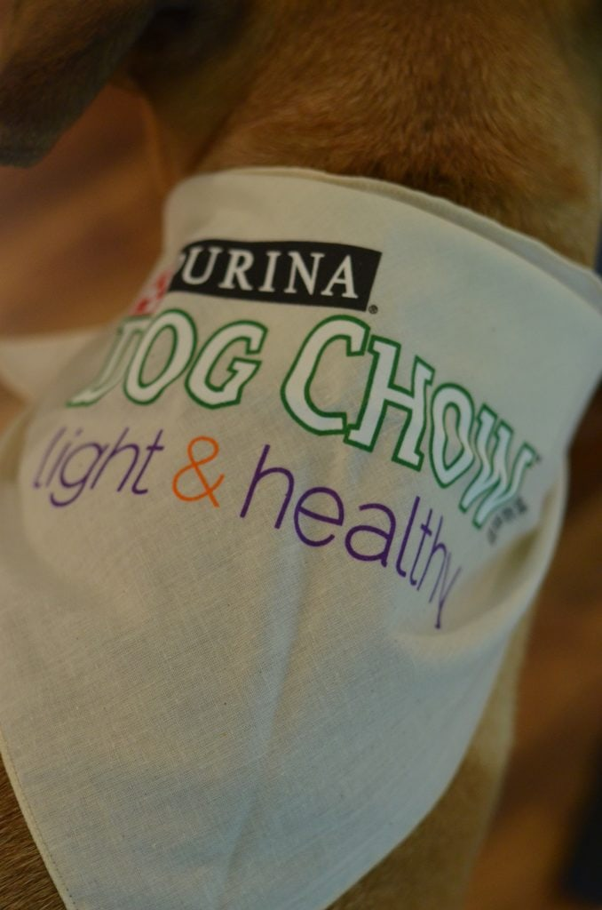 Disclosure:  I received a Purina Dog Chow Light & Healthy promotion prize package for my participation in writing this post.  All opinions are mine!