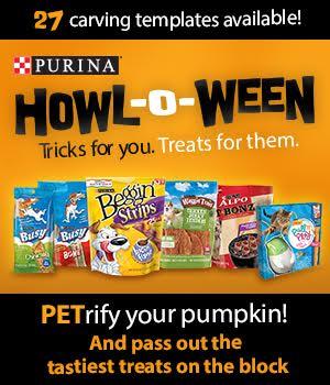 Petrify your pumpkin