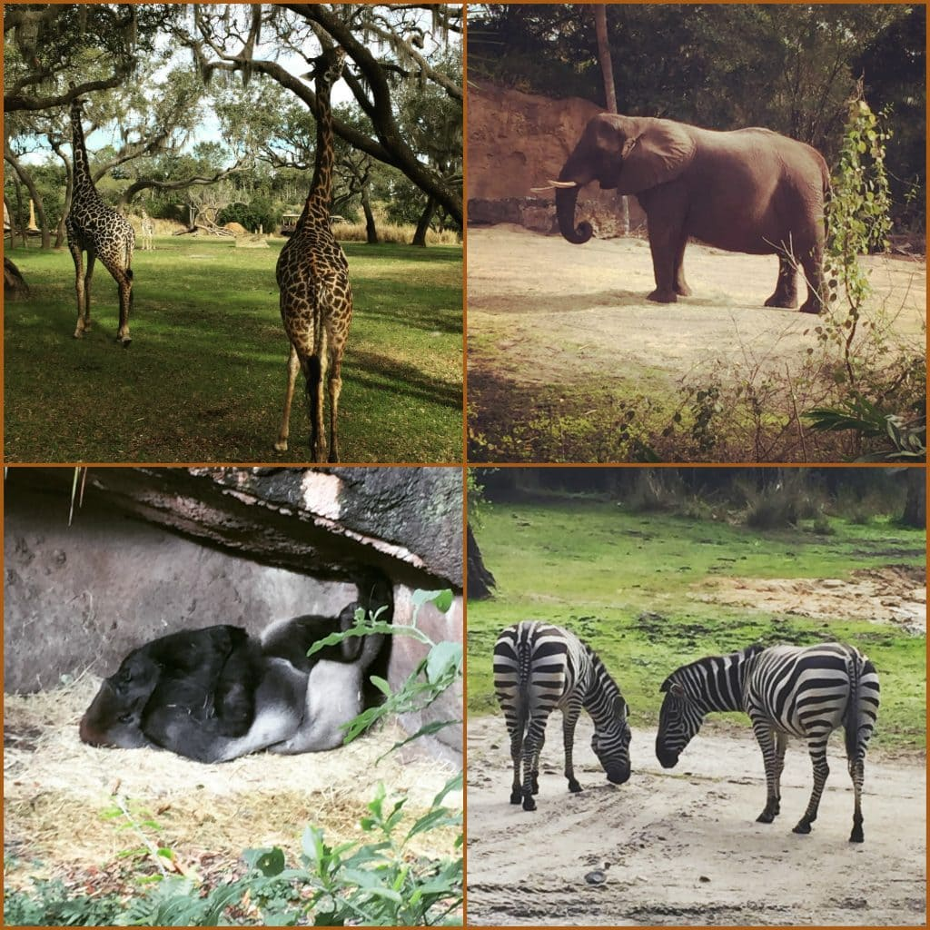 Safari Collage