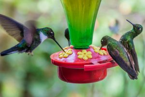 Homemade Hummingbird Food Recipe