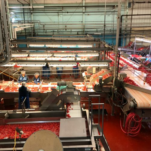 Red Gold canning plant
