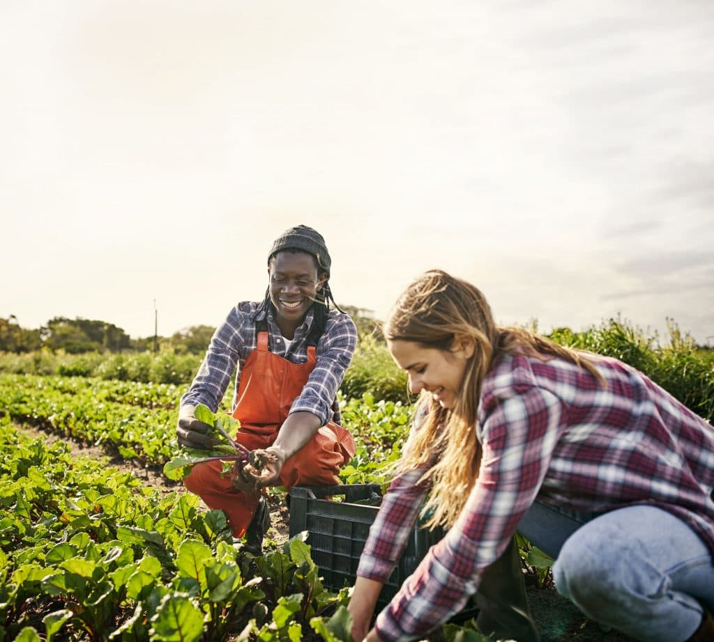 two people working in a farm planting plants