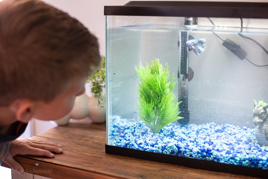 a fish swimming in a fish tank