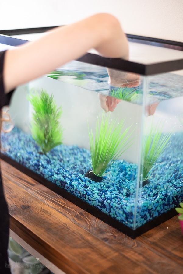 putting plants in a fish tank