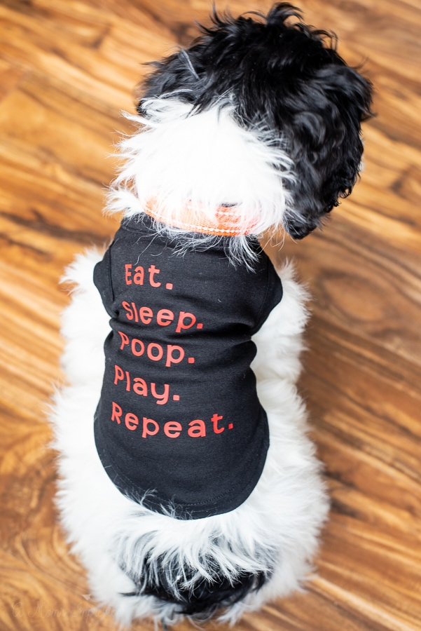 a personalized dog shirt that says eat, sleep, poop, play, repeat