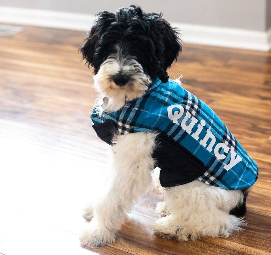 a black and white puppy with a custom dog jacket with his name on it