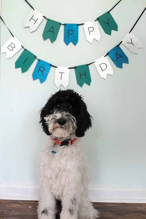 a dog standing in front of a birthday banner