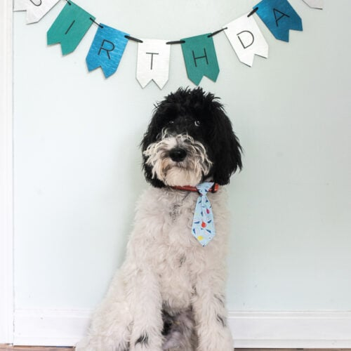 A dog celebrating a Birthday with a birthday banner and a cupcake